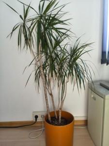 Pflanzen nicht direkt vor dem Umzug gießen